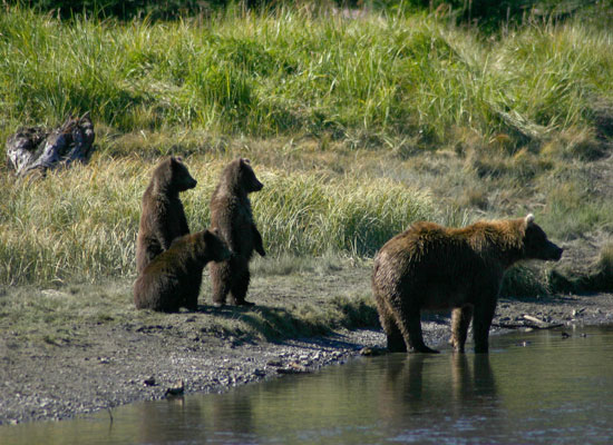 Alaska Bear Camp gallery